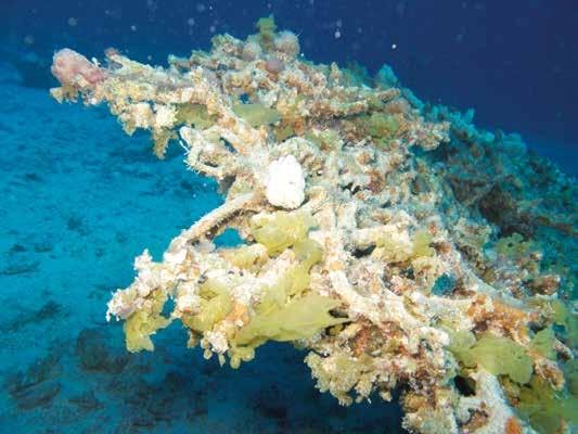 koraalsterfte